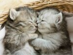 cute-kittens-sleeping-cats.jpg